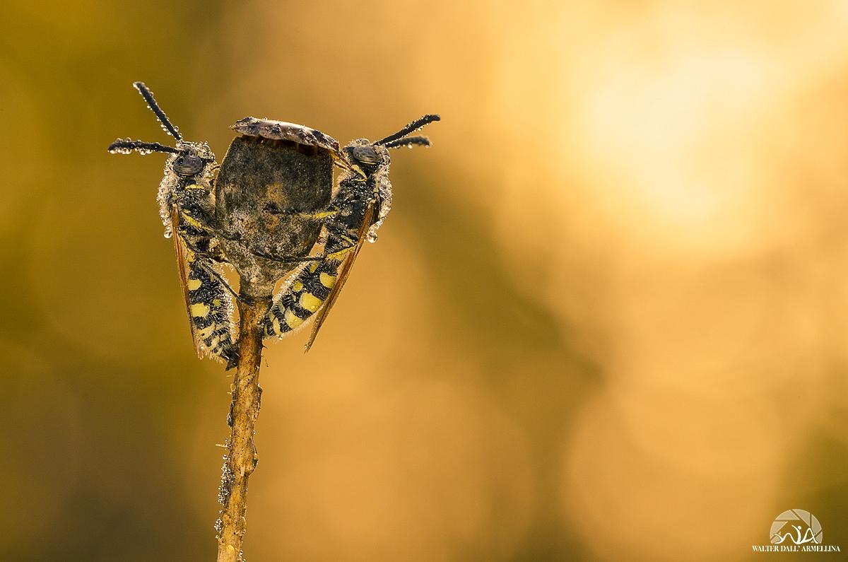 Giochi d'acqua Giochi-dacqua-api