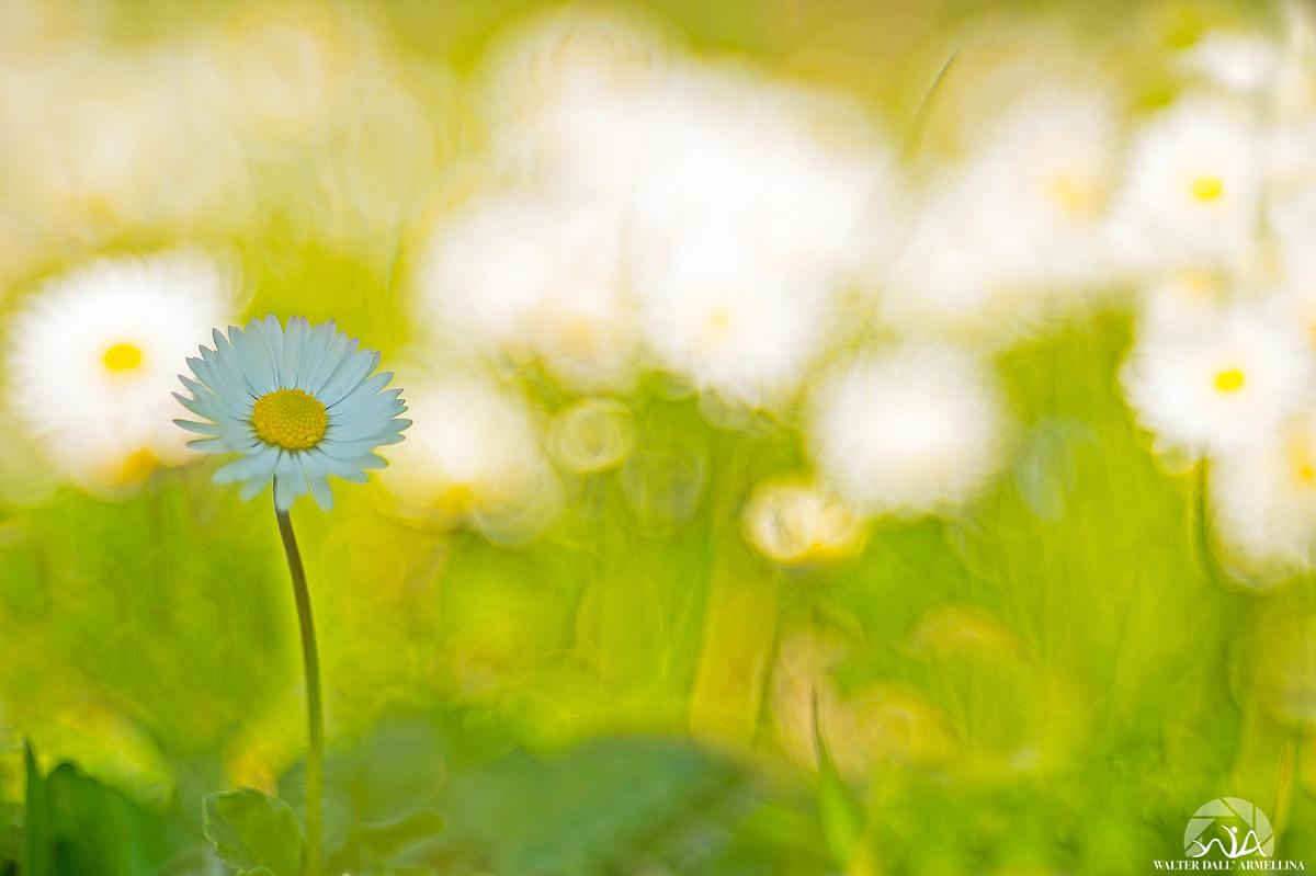 Arriva la primavera? Arriva-la-Primavera-1200