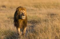 Lui è il Re!