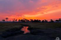 Musiara Marsh – Masai Mara