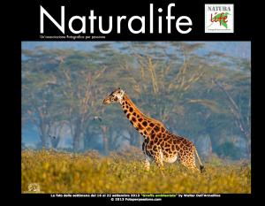 Giraffa ambientata foto della settimana