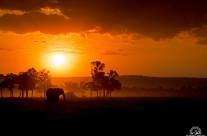 Tramonto nel Masai Mara