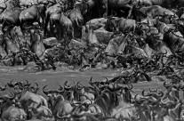 La grande migrazione2