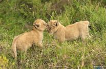 Bacio di cucciolo